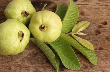 أوراق الجوافة.. حل سحري لتساقط الشعر
